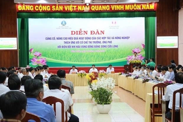 Les cooperatives agricoles devront s'adapter au marche et au climat hinh anh 1