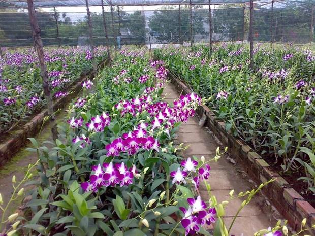Ho Chi Minh-Ville a de forts potentiels d'exportations d'orchidees hinh anh 1