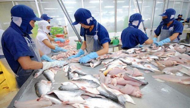 Croissance continue des exportations nationales de pangasius vers l'ASEAN hinh anh 1