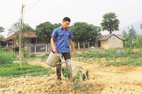 Un jeune Thai fait fortune grace a l'agriculture a Dien Bien hinh anh 1