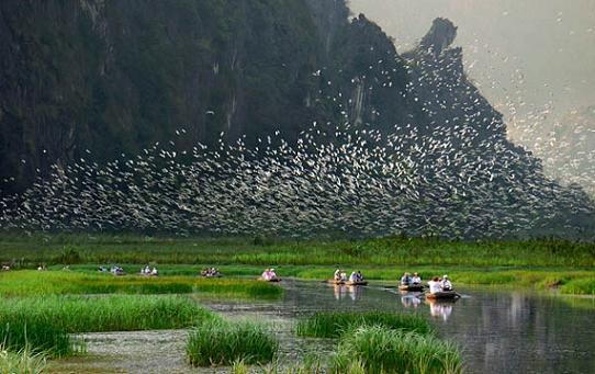 La reserve naturelle submergee de Van Long devient le 9e site Ramsar au Vietnam hinh anh 1