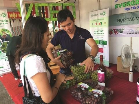 Les vignerons de Ninh Thuan misent sur la qualite hinh anh 2