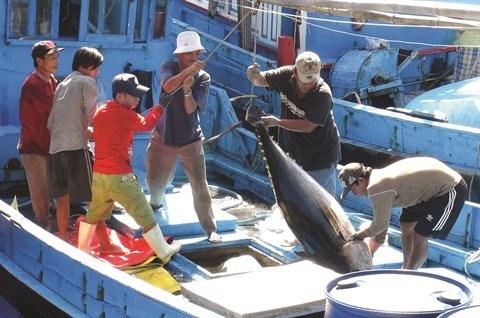 L'aquaculture vietnamienne s'efforce de revenir dans le vert hinh anh 1