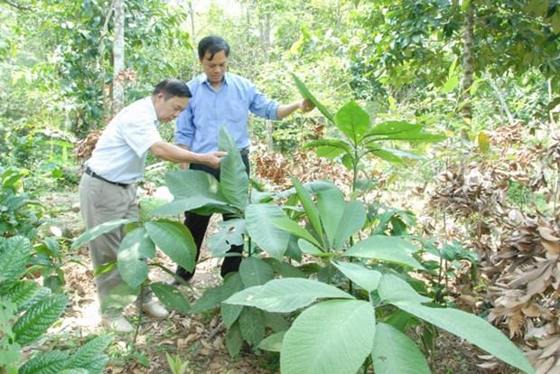 Comment les Dao de Hoanh Bo protegent-ils leurs plantes medicinales? hinh anh 1