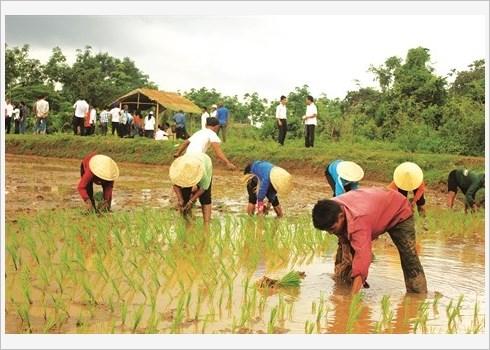 La fete de descente aux champs des Khmers hinh anh 1