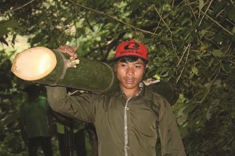 Un village montagnard et ses bambous geants a Quang Nam hinh anh 1