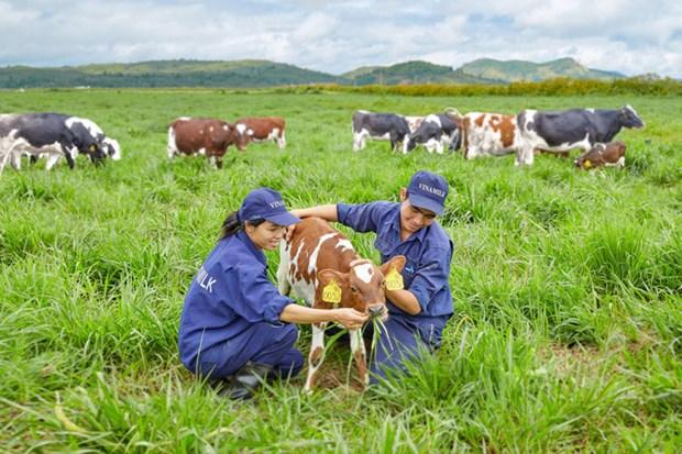 Vinamilk: fer de lance de l'industrie laitiere vietnamienne hinh anh 1