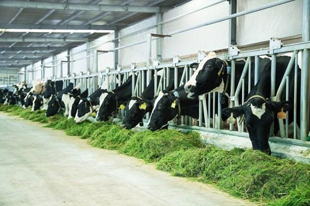 Vinamilk: fer de lance de l'industrie laitiere vietnamienne hinh anh 2