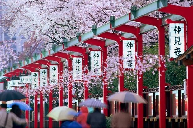 Le Vietnam en tete du tourisme entrant au Japon hinh anh 1