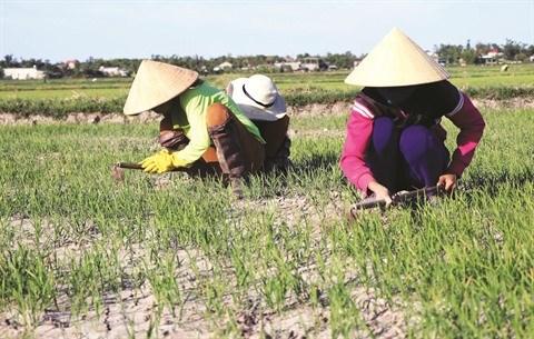 Le delta du Mekong a l'epreuve du changement climatique hinh anh 2