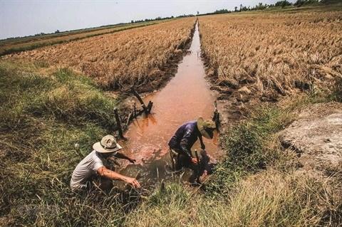 Delta du Mekong : La lutte est en marche contre le changement climatique hinh anh 2