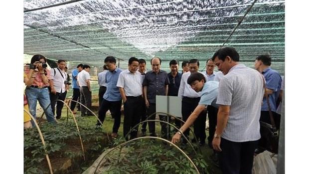 La reserve de biosphere mondiale de Nghe An abrite 1.000 plantes medicinales rares hinh anh 1