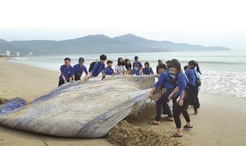 Le Vietnam s'engage a s'associer a la lutte contre les dechets marins hinh anh 1