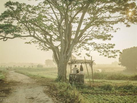 Au Vietnam, le cinema connait une embellie hinh anh 2