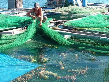 Aquaculture: un projet de 30 millions de dollars autorise a Kien Giang hinh anh 1
