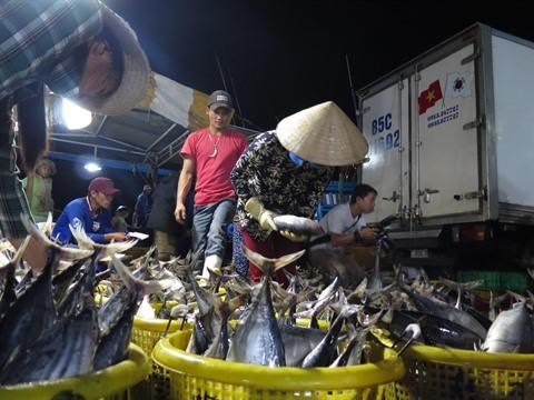 Les exportations de thon vietnamien continuent de croitre hinh anh 1