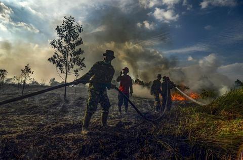 L'Indonesie peine toujours a maitriser ses feux de foret hinh anh 1