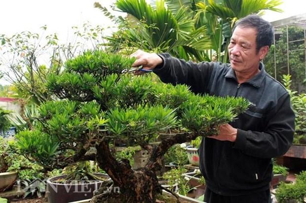 Dans le village de Vi Khe, la vie au rythme des bonsais hinh anh 2