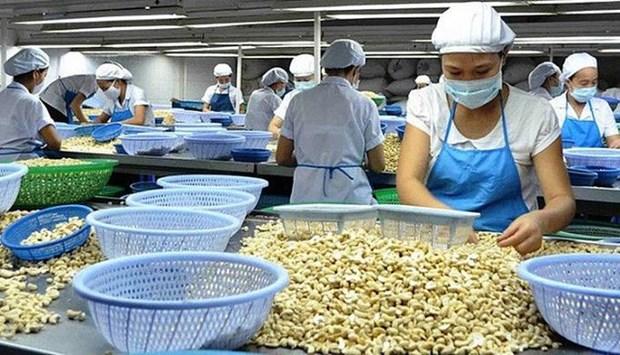 Noix de cajou: prevision de 450.000 tonnes exportees en 2019 hinh anh 1