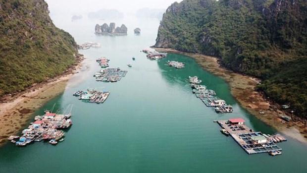De nouvelles sirenes de la baie de Ha Long hinh anh 1