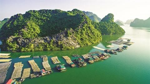 Les paysans a Ha Long s'affairent et font fortune hinh anh 1
