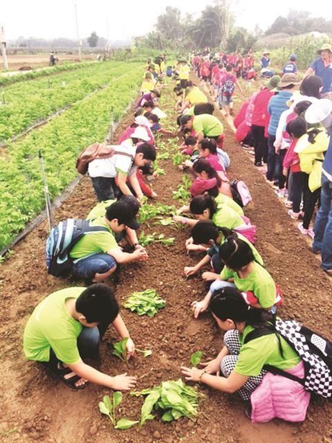 Quand les champs deviennent des classes a Da Nang hinh anh 1