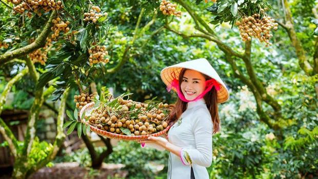 Le premier lot de longanes vietnamiens frais arrive en Australie hinh anh 1