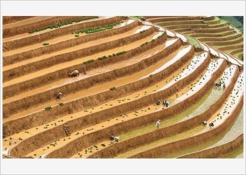 Quatre photos du Vietnam dans le Top 50 mondial 2019 hinh anh 1