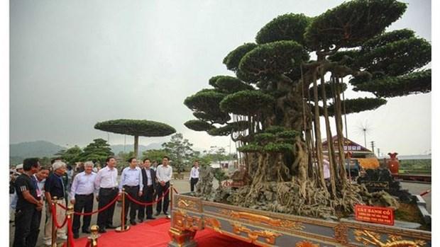 L'exposition de bonsais de l'Asie-Pacifique 2019 prevue en novembre a HCM-Ville hinh anh 1
