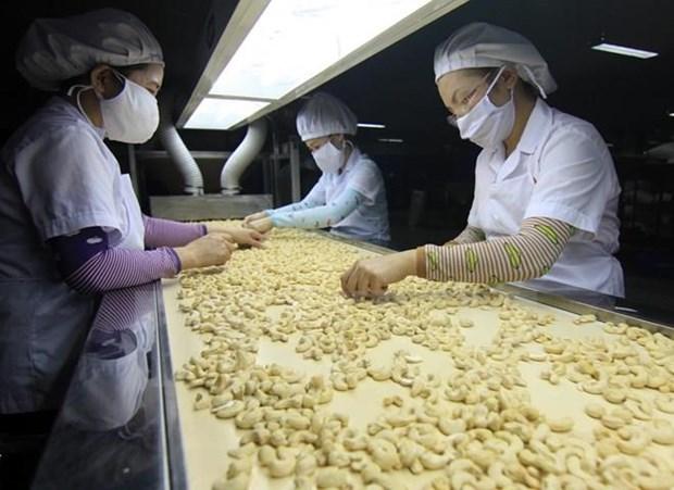 Les Etats-Unis, toujours premier debouche de la noix de cajou du Vietnam hinh anh 1