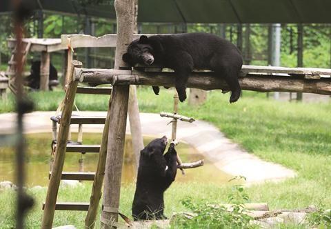 Au bonheur des ours au pied du massif de Tam Dao hinh anh 2