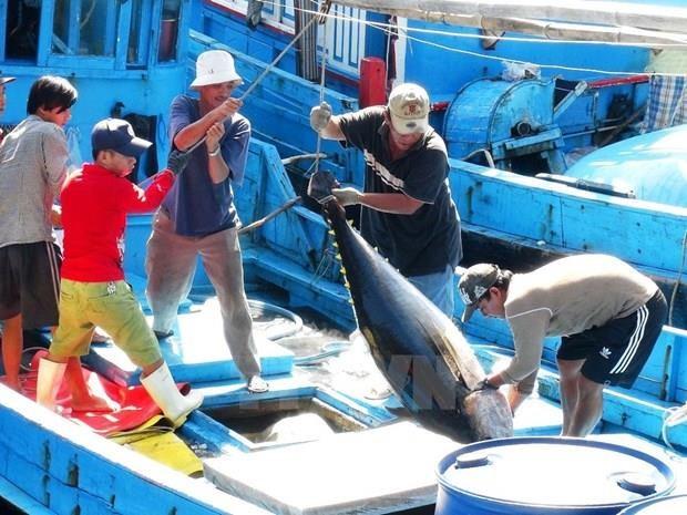 Les exportations de thons restent sur une pente ascendante hinh anh 1