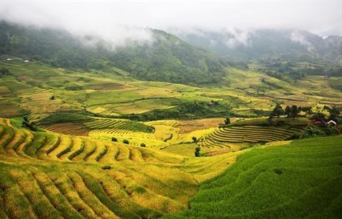 Lao Cai : la beaute des rizieres d'Y Ty a la saison du riz mur hinh anh 1