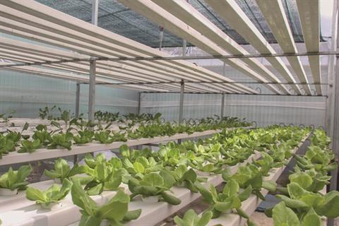 Quand les decharges deviennent des jardins de legumes bio hinh anh 1