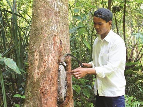 L'apiculture durable des Gie Trieng de Quang Nam hinh anh 1