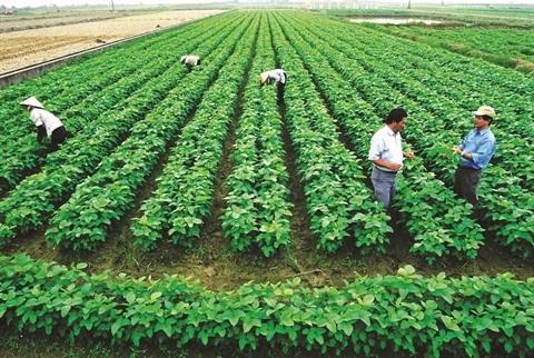 Agriculture: Relier les paysans aux entreprises pour reussir l'integration hinh anh 2