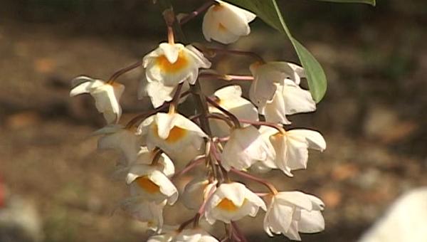 Cultivateur d'orchidees a Ninh Thuan et fier de l'etre hinh anh 3