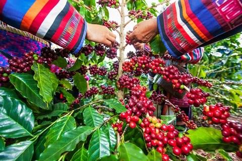Aux Etats-Unis, Nguyen Coffee Supply veille au grain vietnamien hinh anh 2