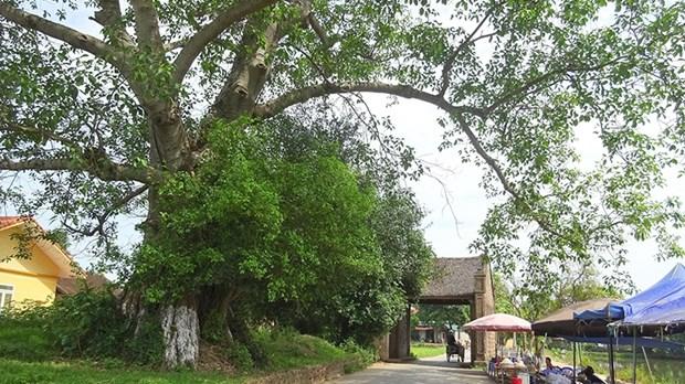 Les villageois de Duong Lam, de l'amour pour la terre natale a l'espoir de la conserver hinh anh 1