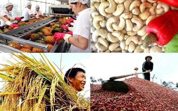 L'agriculture en quete d'une strategie de competitivite hinh anh 1