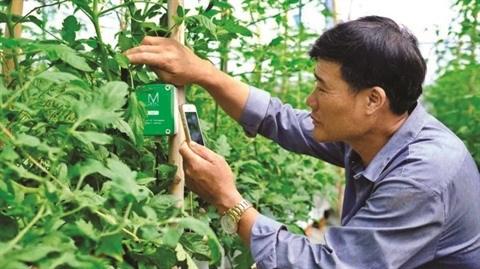 La province de Lam Dong met le cap sur l'agriculture high-tech hinh anh 2