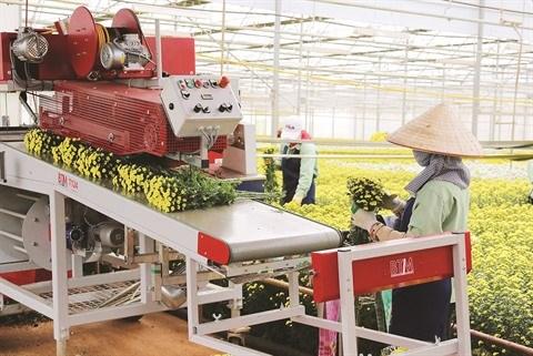La province de Lam Dong met le cap sur l'agriculture high-tech hinh anh 1