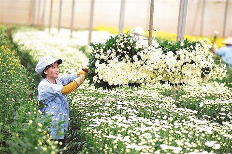 La province de Lam Dong met le cap sur l'agriculture high-tech hinh anh 3