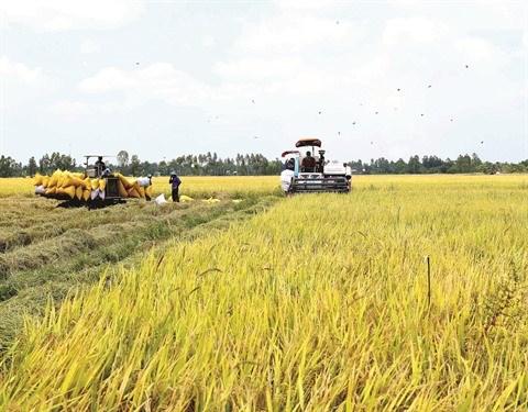 Le riz vietnamien recolte un succes mondial hinh anh 1