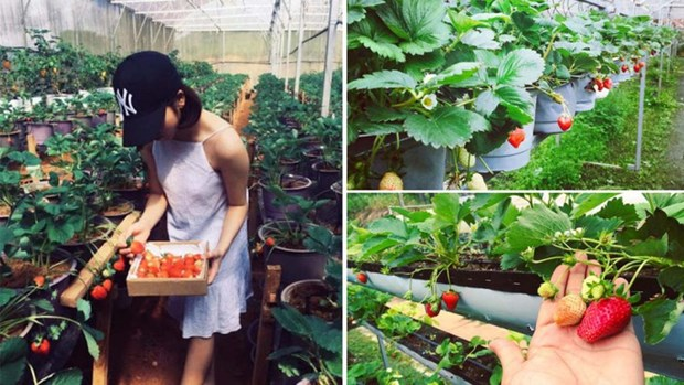 Agrotourisme en plein essor a Da Lat hinh anh 1