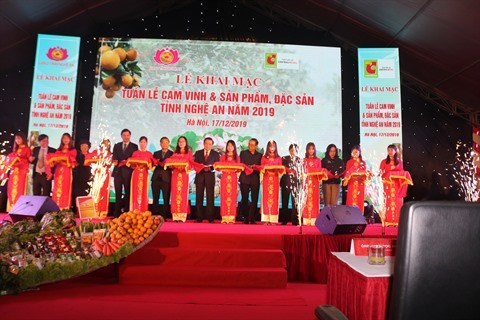 Les oranges de Vinh mis en avant a Hanoi hinh anh 1