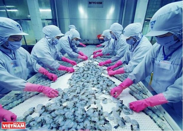 Les centres d'exportation de crevettes du Vietnam s'affirment hinh anh 2