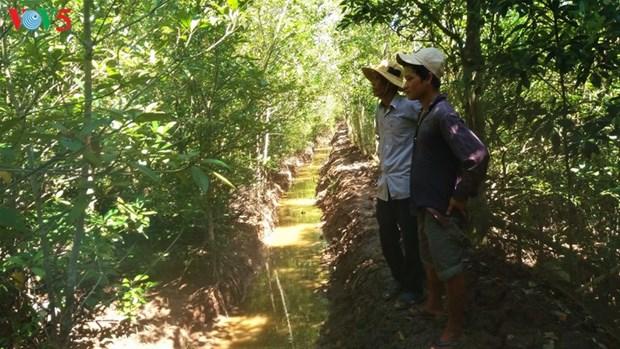 Soc Trang plante des forets littorales pour mieux s'adapter au changement climatique hinh anh 1