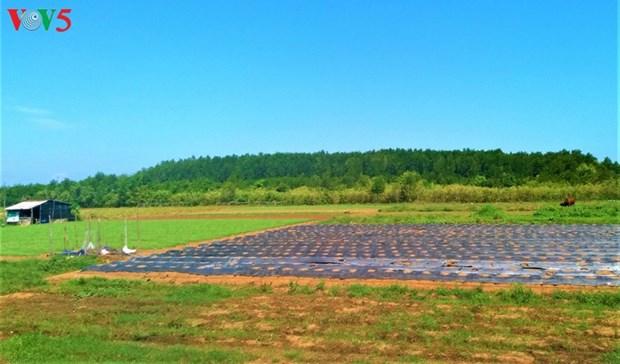 Soc Trang plante des forets littorales pour mieux s'adapter au changement climatique hinh anh 2