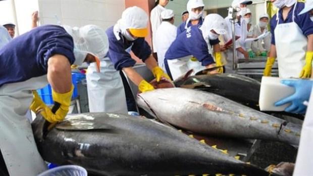 Les exportations du thon vers l'Italie augmentent de 18,7% hinh anh 1
